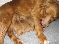 Fyra födda 1003044