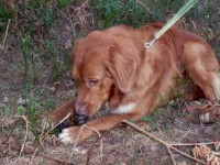 Kasper 2008-12-28