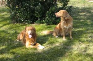 Gino och Lisa 090410