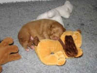2010-11-19 Nyaste leksaken är klar favorit, mjuk och go' plyschhund