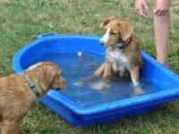Dexter funderar på om det finns plats hos Simba i vattnet.