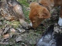 Stella fick svårt att välja mellan and och kråka