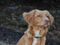 Kiwi valpträff 091107